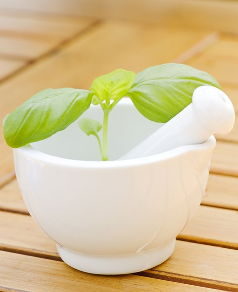 Basil in mortar and pestle: Basil in mortar and pestle