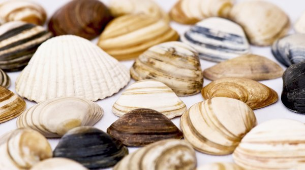 Sea shells: shell collection